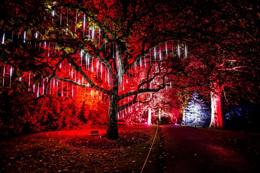 Christmas at the Botanics - the Dripping Tree
